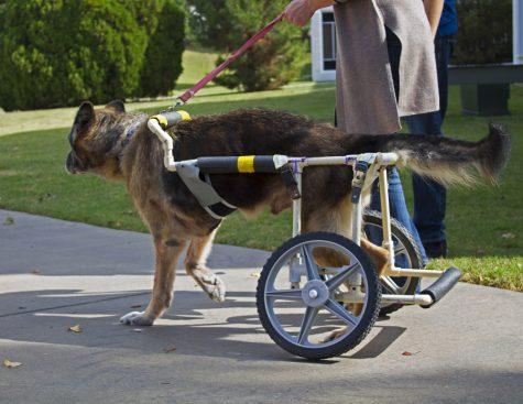 Man's Best Friend, Man-Made Legs