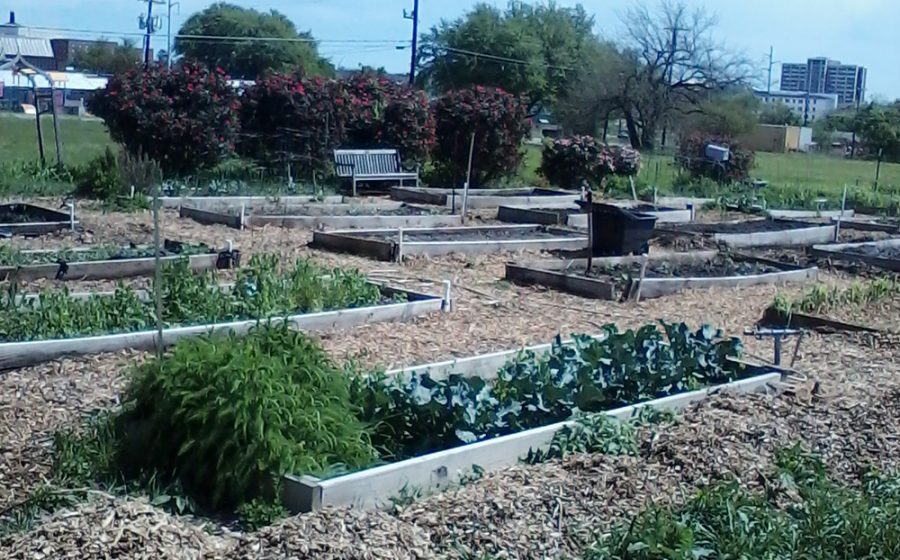 The+Commerce+Community+Garden+is+already+producing+food+for+some%2C+and+others+are+just+starting+to+plant.