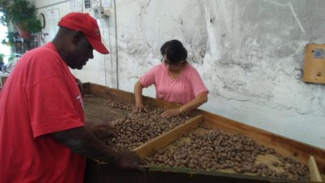 Busy season expected for Campbell Pecans