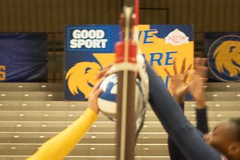 Volleyball Blue-Gold Scrimmage Aug. 2019 [Photo Gallery]